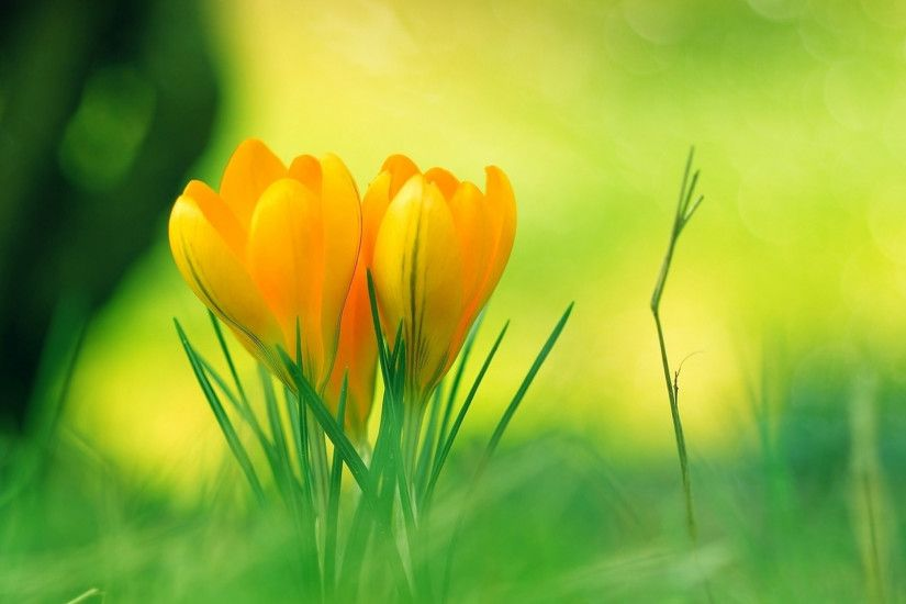nature backgrounds hd. nature backgrounds hd wallpapers mother flower  images beautiful green cool widescreen 22621504