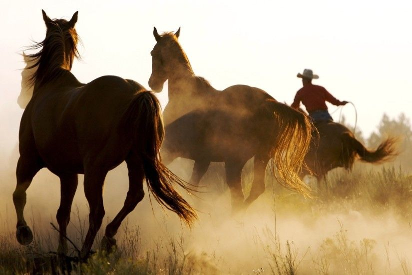2560x1600 Wild Horses and Cowboy desktop PC and Mac wallpaper 2560x1600