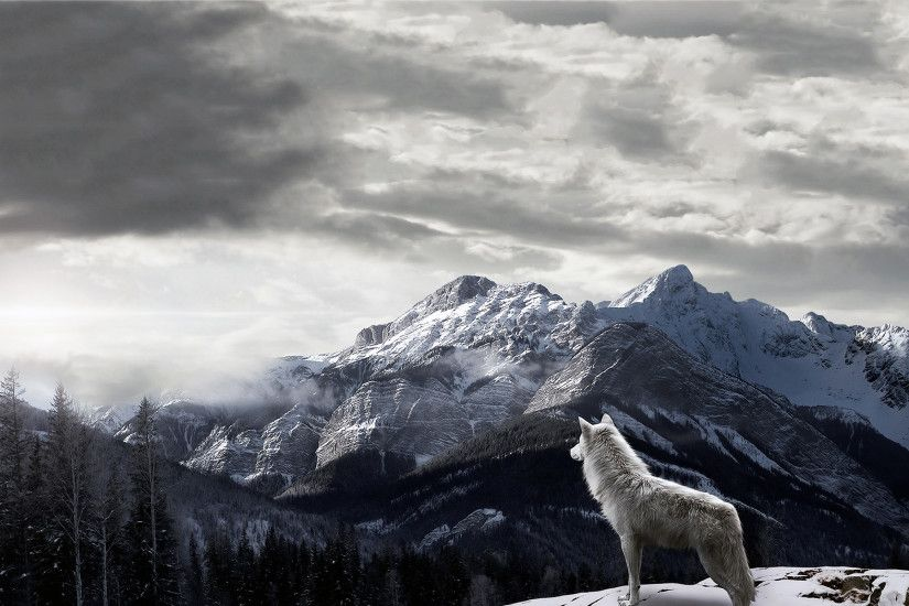 Mountains Gray Wolf Wallpapers - http://www.0wallpapers.com/1778