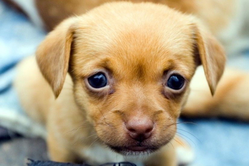 Cute Puppy Wallpapers New for PC & Mac, Tablet, Laptop, Mobile