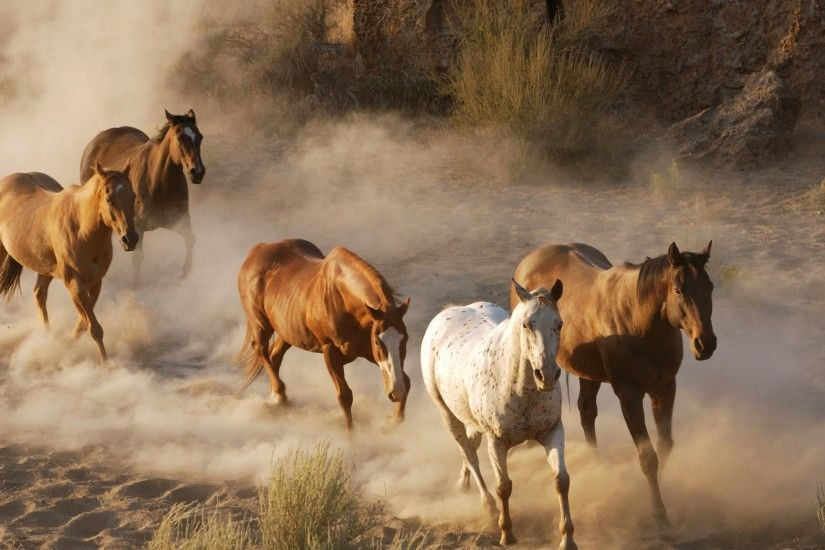 Wild Horses Running Free | Free Download Running Horse Wallpaper Wallpapers  Free