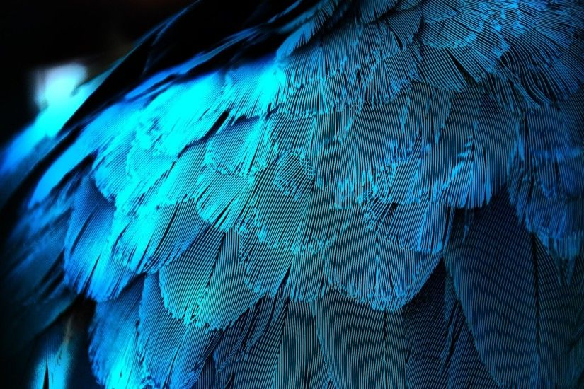 ... Wallpaper Peacock Feather Photo Wallpaper Peacock Feather Pics Peacock  ...
