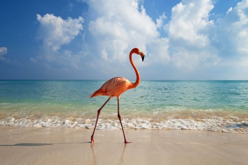 Flamingo taking a walk on the beach wallpaper