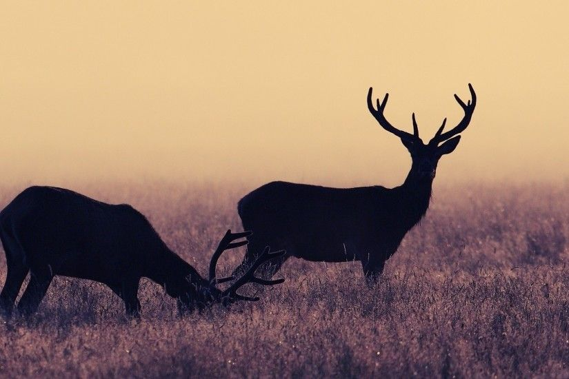 Deer-wallpapers-HD-pictures-images-free
