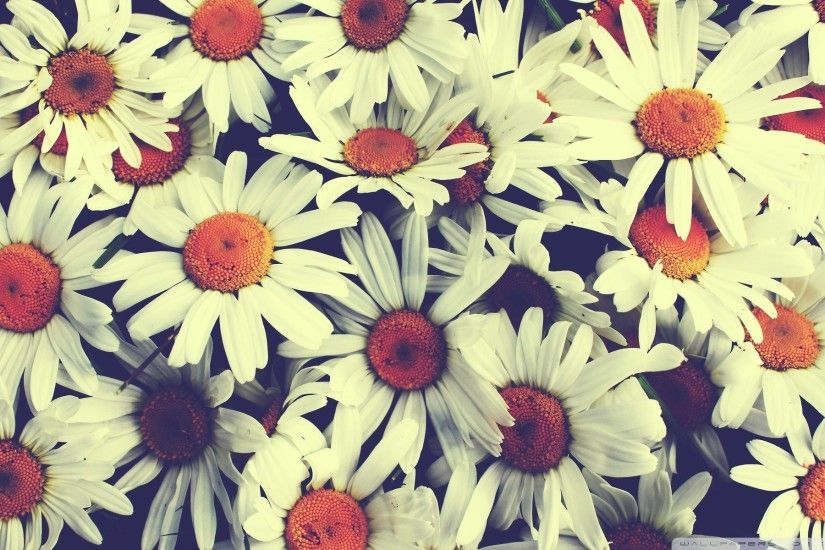 Vintage Flowers High Quality Wallpapers