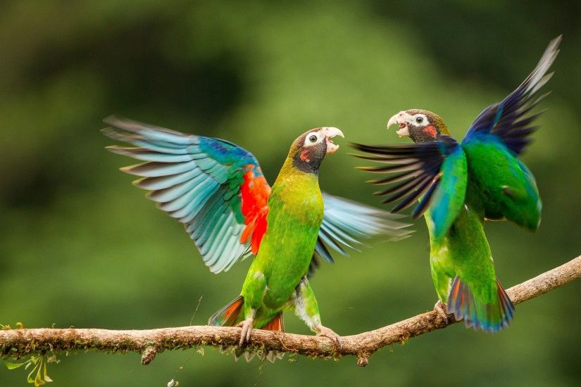 ... Love Birds Images-Zoo Photography Pictures Wallpaper HD Gallery