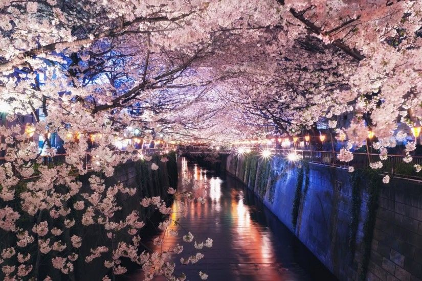 wallpaper.wiki-Flower-on-the-river-in-japan-