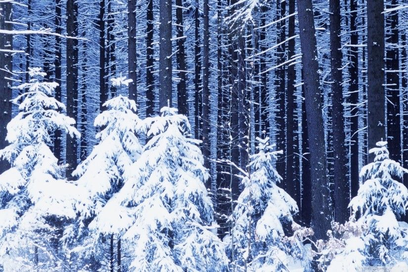 ... snowy forest hd desktop wallpaper widescreen high definition ...