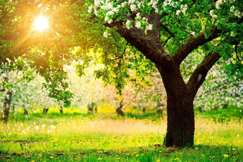 beautiful spring nature tree desktop wallpaper image