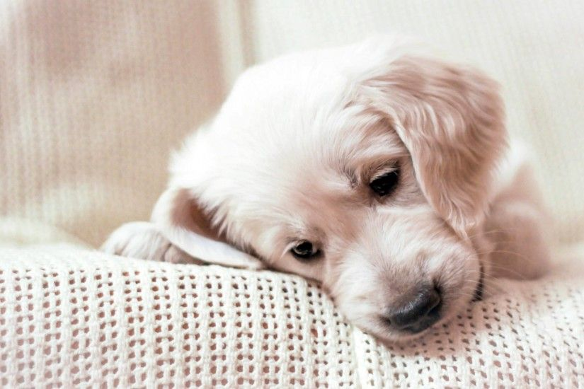 1920x1080 Wallpaper golden retriever, puppy, muzzle