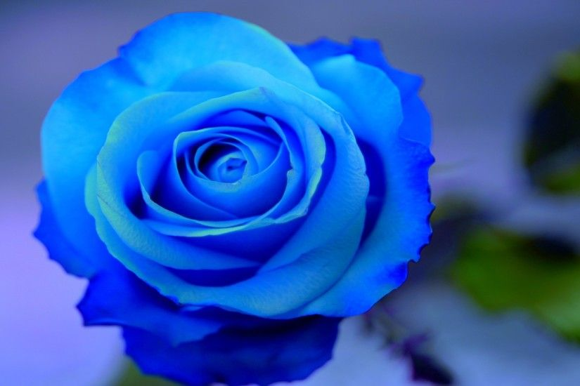 Beautiful Flowers Wallpaper Blue On Blue 17 Background