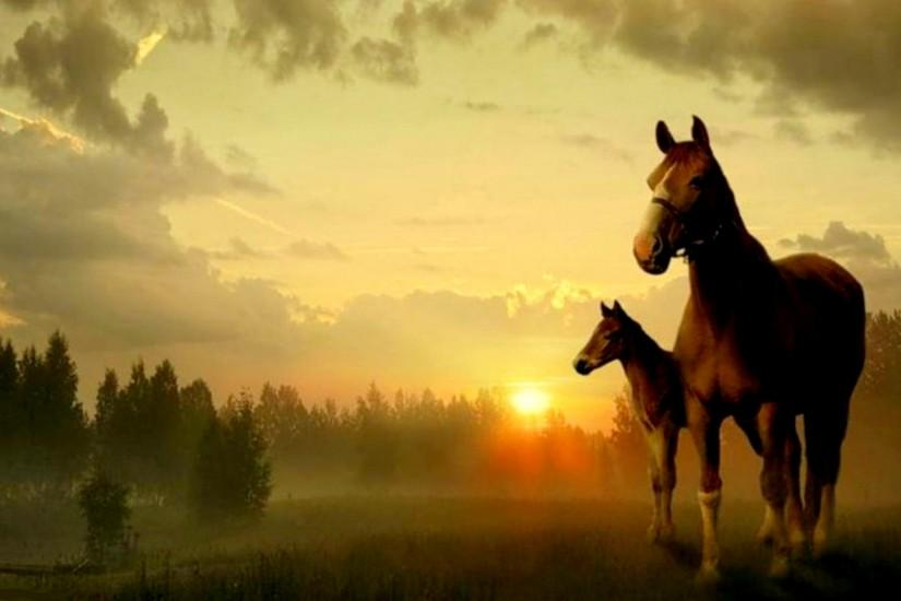 horse wallpaper 1920x1200 pictures