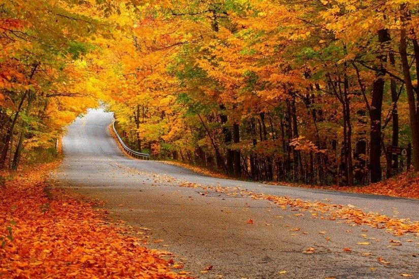 0 1920x1080 Autumn Forest Scenery Wallpaper 1920x1080 Autumn Forest Street  Wallpaper
