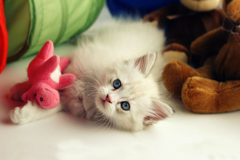 Beautiful Cute Kitten Desktop Wallpapers