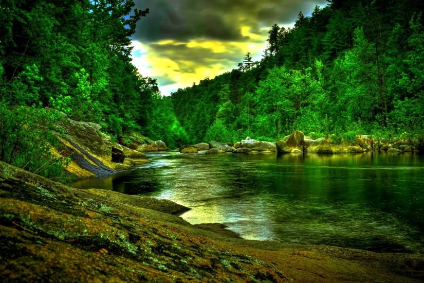 Amazon Rainforest Wallpaper - Wallpaper, High Definition, High Quality .