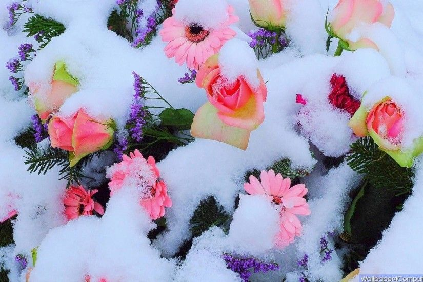 Pink Flowers Pretty Snow Flower Wallpapers Hd