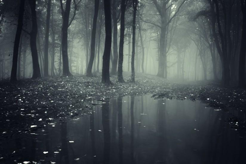 download dark forest wallpaper 1920x1200 for ipad 2