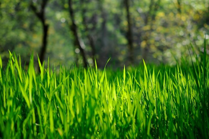 widescreen grass wallpaper 1920x1280 smartphone