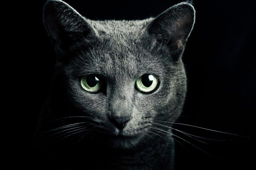 Preview wallpaper cat, black, breed, russian, blue eyes, green eyes,