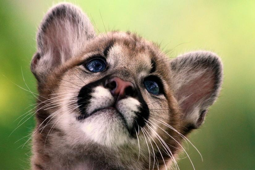 Cute Baby Animal Backgrounds HD.