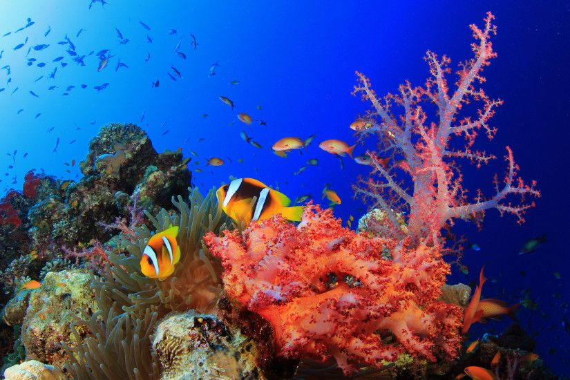 Explore and share Colorful Coral Reef Wallpaper on WallpaperSafari