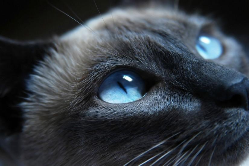 Black grumpy cat images 1080p hd wallpapers.