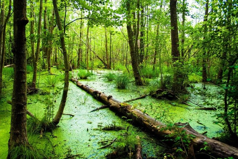 74 Swamp Wallpapers | Swamp Backgrounds