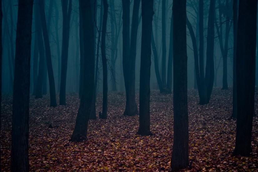 dark forest wallpaper grasscloth 4k full hd iphone android wallpaper