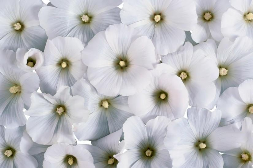 flowers background 1920x1200 for phone