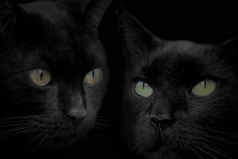 black cat wallpaper Black Cat Wallpaper Free - Laut Digital