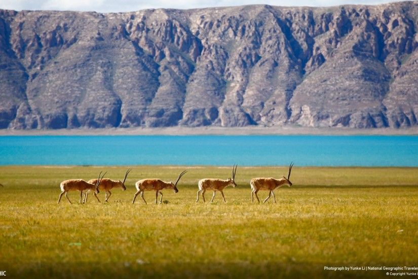 3. national-geographic-wallpaper-free-Download3-600x338