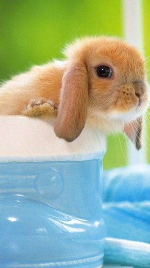 Cute Bunny iPhone 6 Plus HD Wallpaper ...