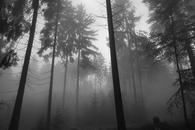 Black And White Pictures Anime Forest 8 Background. Black And White  Pictures Anime Forest 8 Background