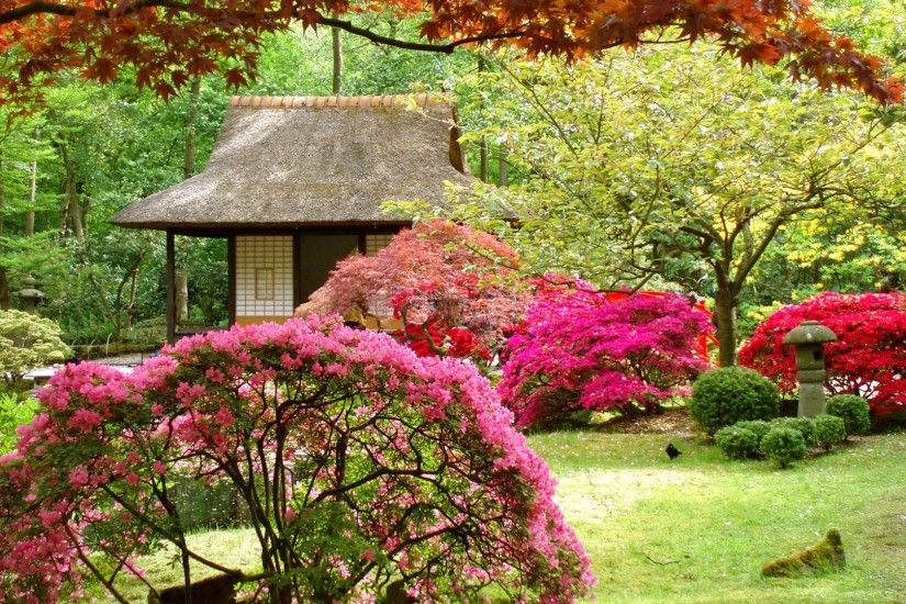 Amazing Garden Trees Images HD Photos