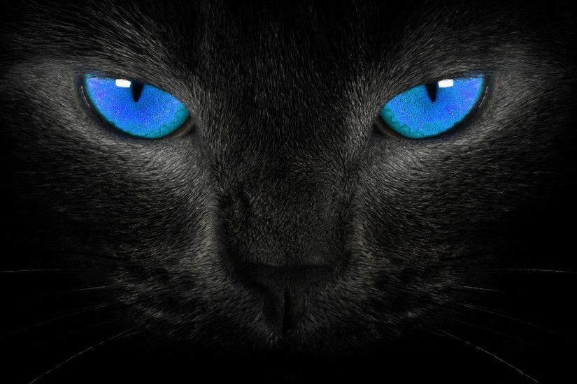 blue eyes black cat background