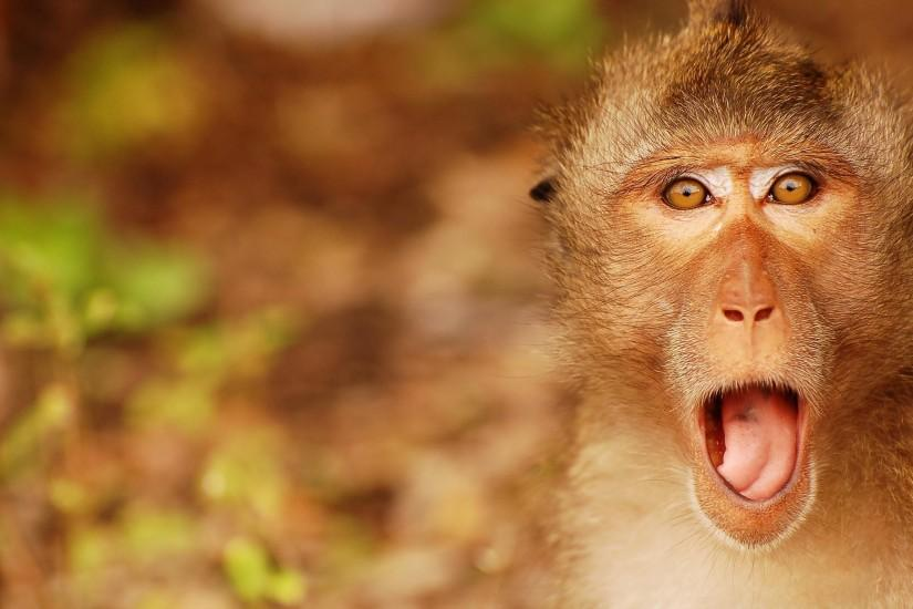 or share Funny Monkey Desktop Wallpapers And Backgrounds on Facebook .