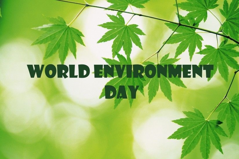 environment day plant save trees hd wallpaper