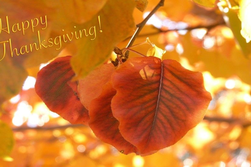 Thanksgiving Wallpaper Backgrounds 28 303004 Images HD Wallpapers .