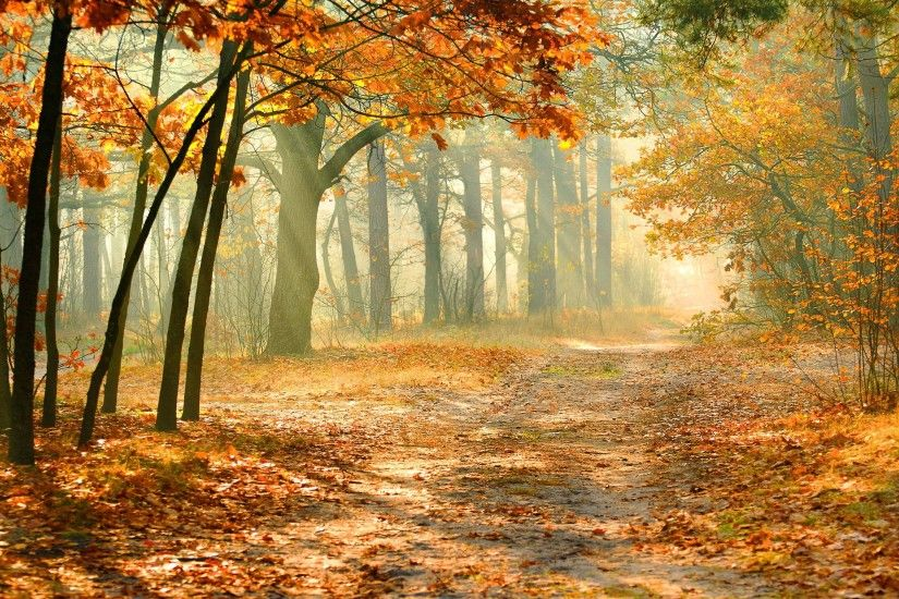Virtual Autumn Background