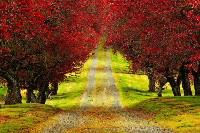 Amazing Roads with Trees | Red Trees Autumn Road HD Wallpaper