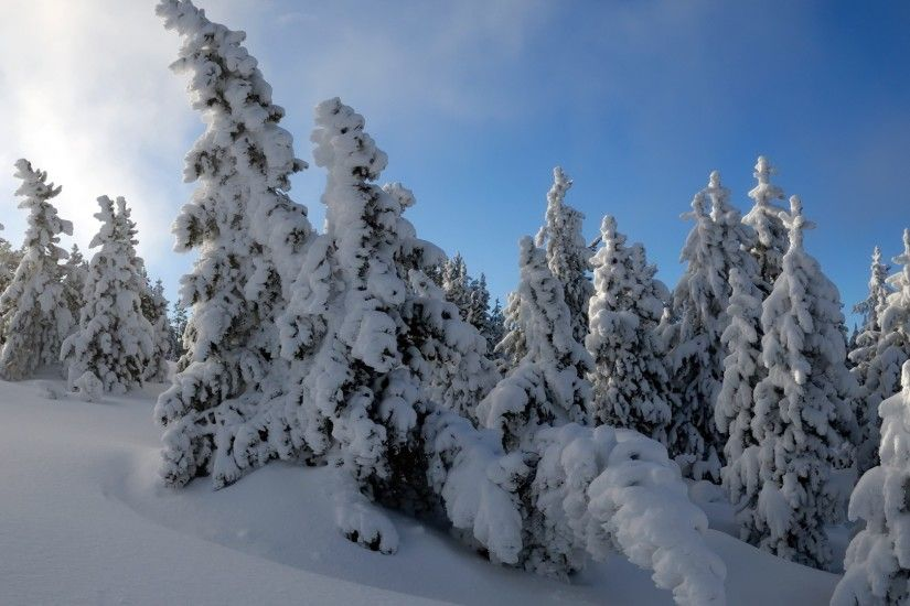 Snow Trees Wallpaper Winter Nature Wallpapers