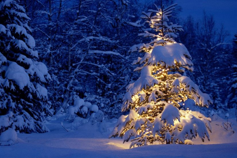 19 Beautiful Outdoor Christmas Tree Hd Desktop Wallpapers