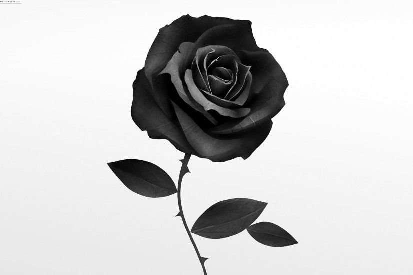 Best Black Rose. Â«