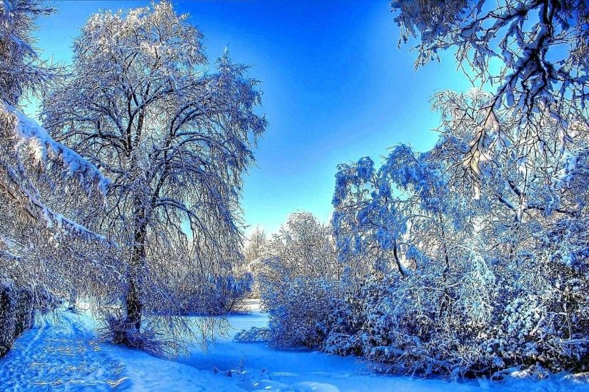 Rivers Forest Winter River Snow Nature Wallpaper Computer