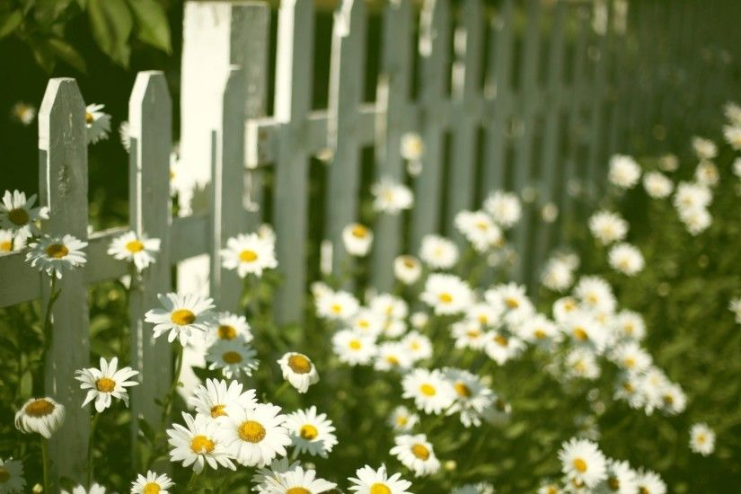 mood flower flowers flower flower chamomile daisy fence fencing flowers background  wallpaper widescreen full screen widescreen