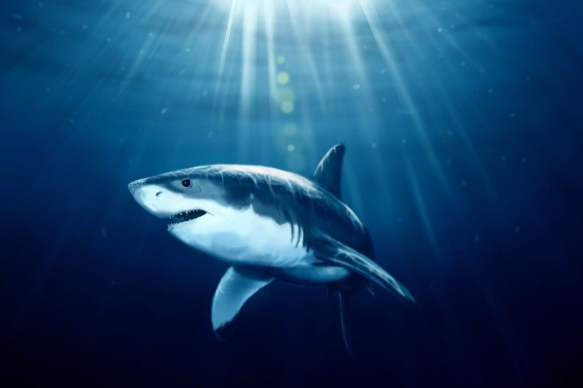 images shark wallpapers windows wallpapers hd download free cool background  images windows 10 tablet 1920×1200 Wallpaper HD