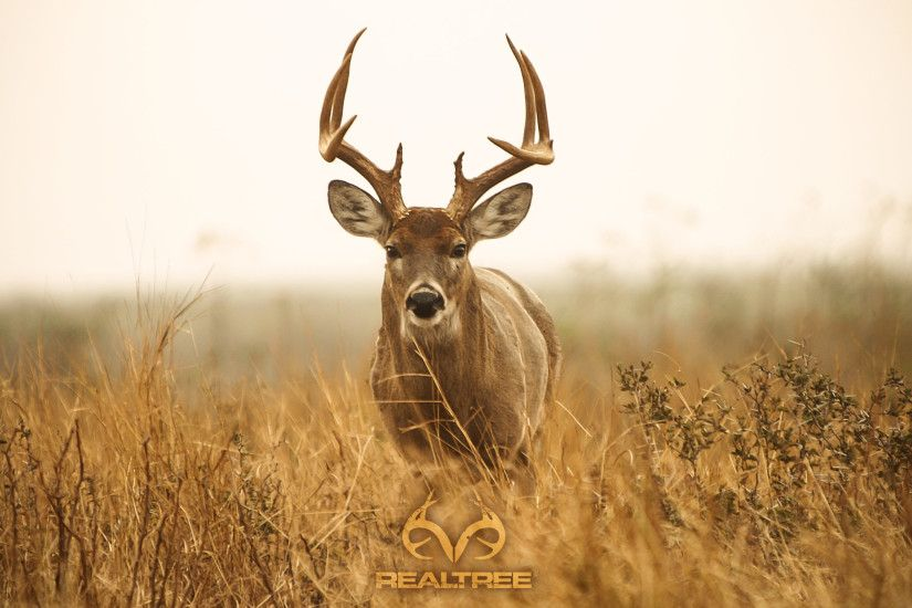 Similiar Deer Hunting Desktop Backgrounds Fall Keywords