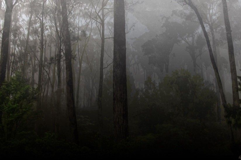 Nature <b>Wallpaper</b>: <b>Dark Forest Wallpaper