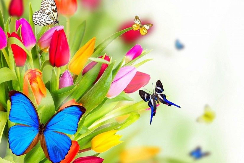 #226677 Color - Designs Photomanipulation Beautiful Four Seasons Nature  Animals Beauty Butterfly Tulips Bright Cool