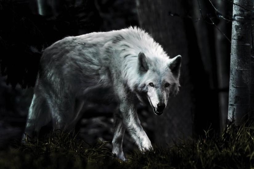 vertical wolf wallpaper 2494x1658